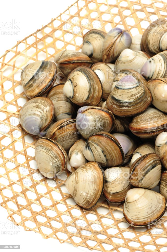 Clams on the white background stock photo
