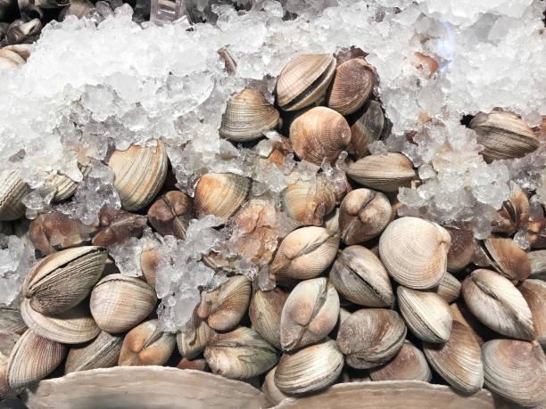 clams - mięczak zdjęcia i obrazy z banku zdjęć
