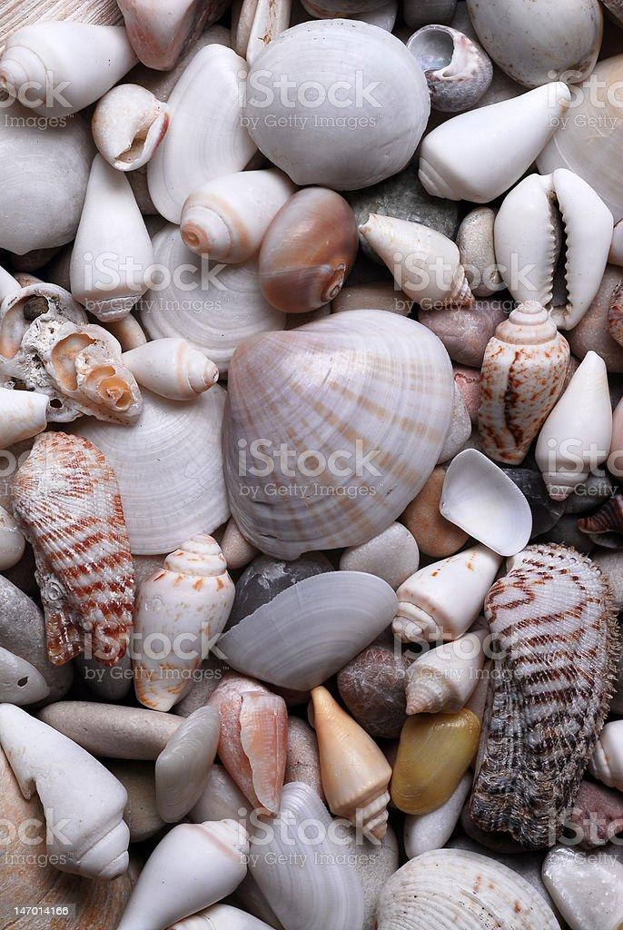 Clams, stones stock photo