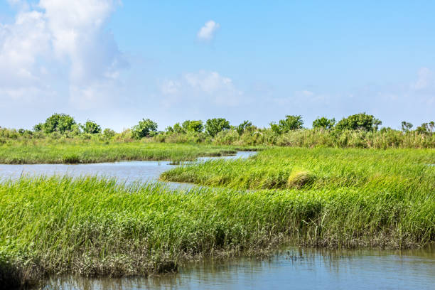 Classic bayou swamp scene of the American South stock photo