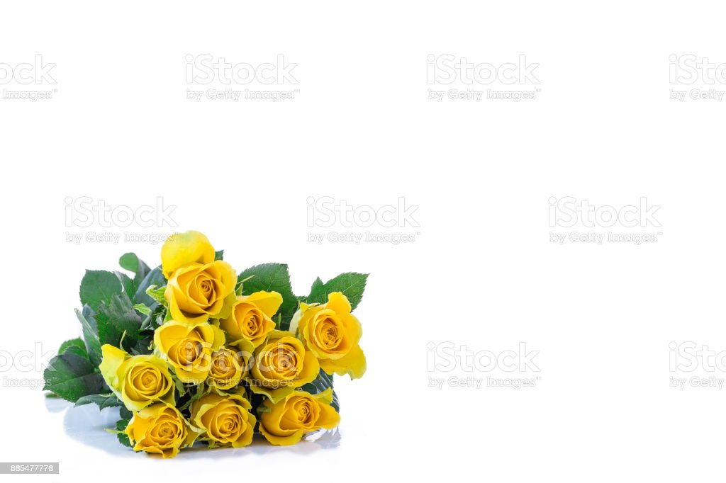 A classic bouquet of yellow rosesleft corner, against white background.copy-space on right stock photo