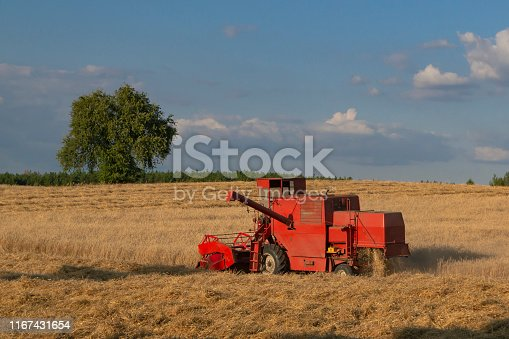 Classic red combine harvester during the harvest in the sunset.