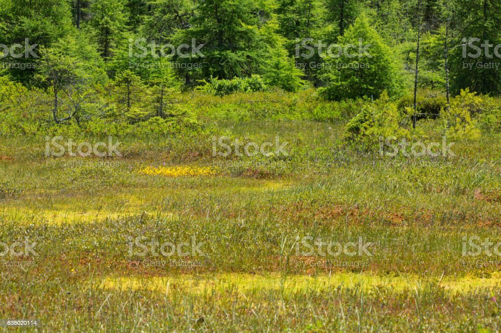 Classic kettlehole peat bog in New Hampshire. stock photo