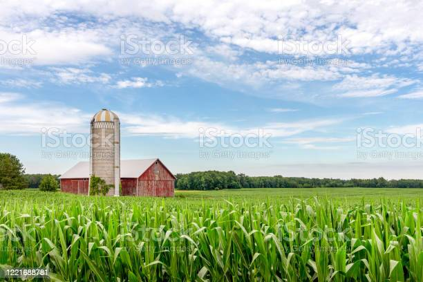 Photo of Classic Red Barn in a Corn Field