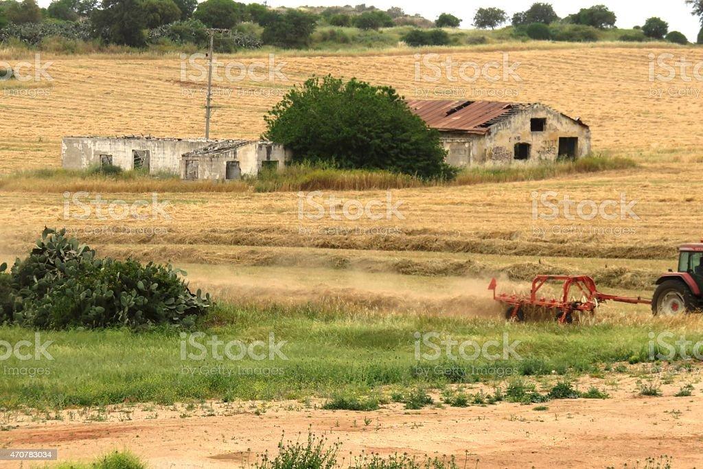 Classic red tractor prepares haystacks