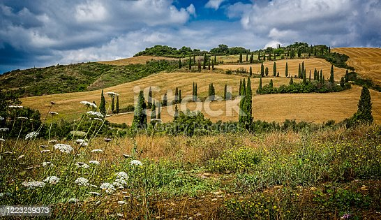 Classic Tuscan landscape of cypress trees and wheat fields