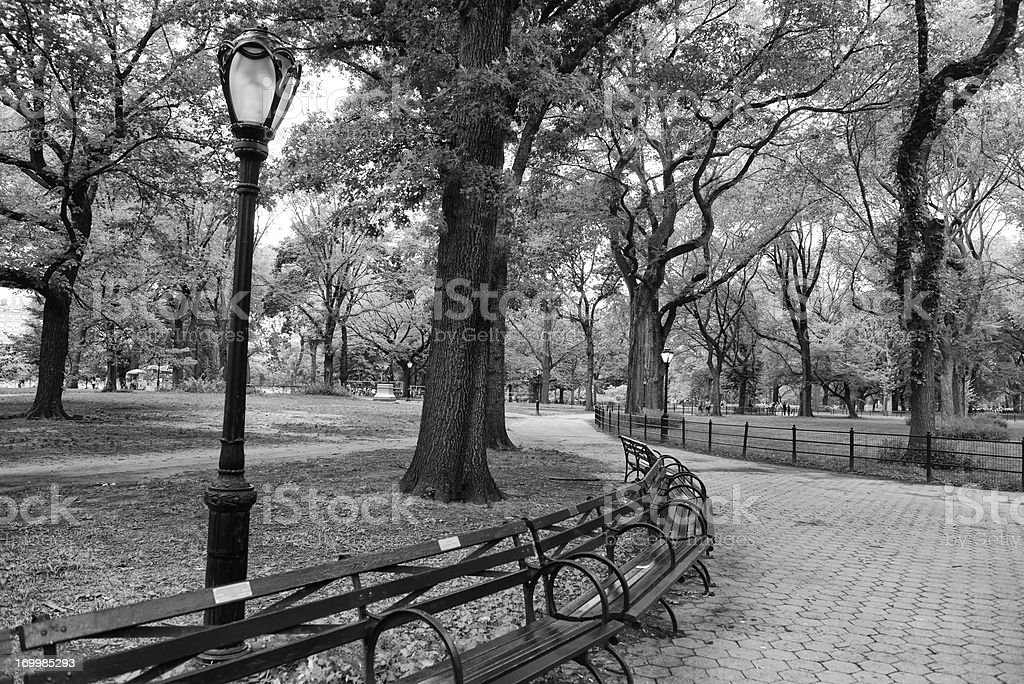 Classic Urban Landscape Central Park Benches New York City royalty-free stock photo