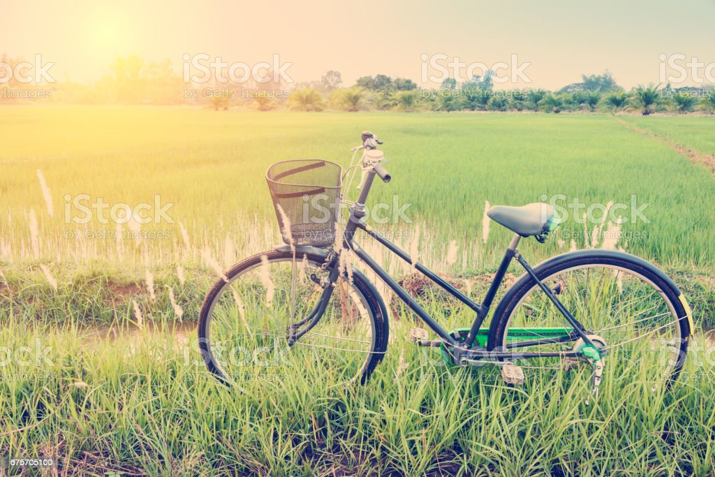 Classical japanese bicycle parks near a paddy field. stock photo