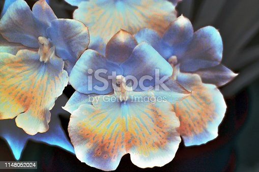 Orchids rendered after an IR capture to reveal the fine structure of flower petals