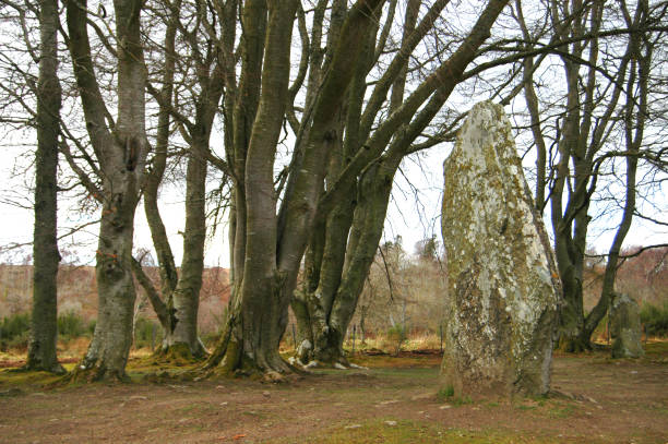 Clava Cairns Standing Stone amidst Trees Standing stone in wooded area at Clava Cairns, Inverness culloden stock pictures, royalty-free photos & images