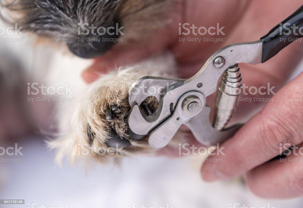 Krallen schneiden bei der Dog - Pflege – Foto