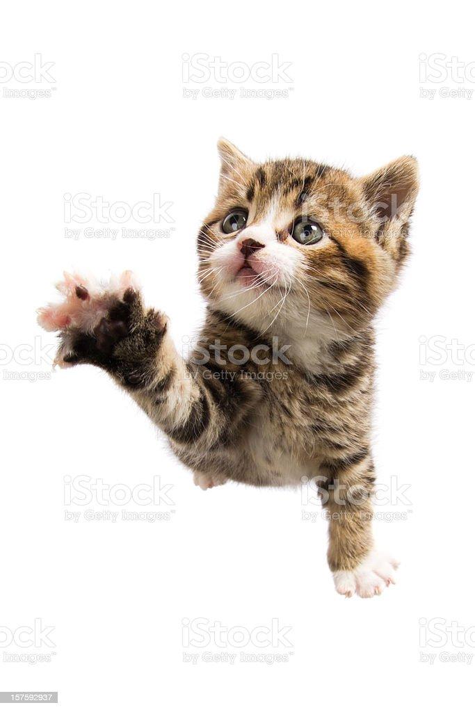 claw paw stock photo