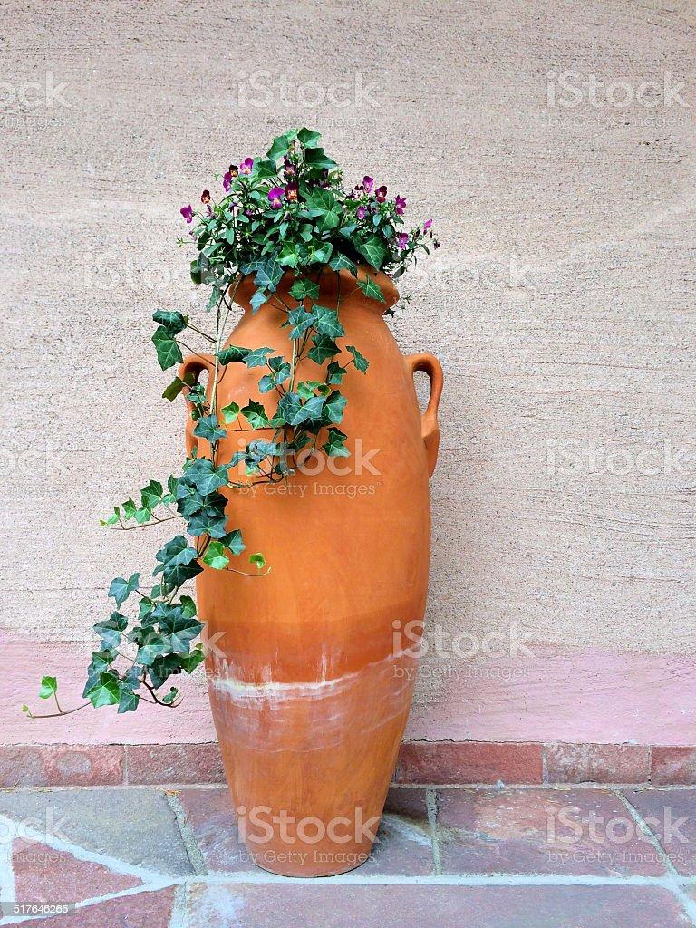 Anfore Con Fiori.Clay Anfora Con Fiore Verde Edera Fotografie Stock E Altre