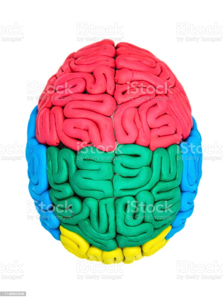 Clay Model Of Human Brain Stock Photo - Download Image Now