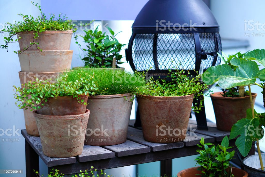 Clay Pots With Plants On Wooden Table Garden Decoration Stock Photo -  Download Image Now