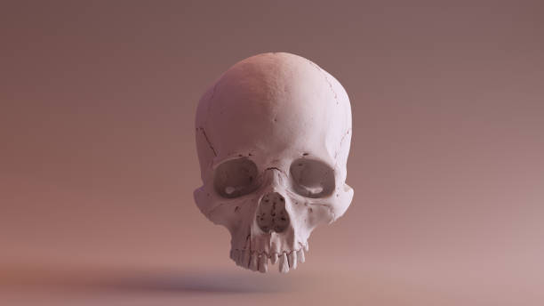 Clay Skull Front stock photo