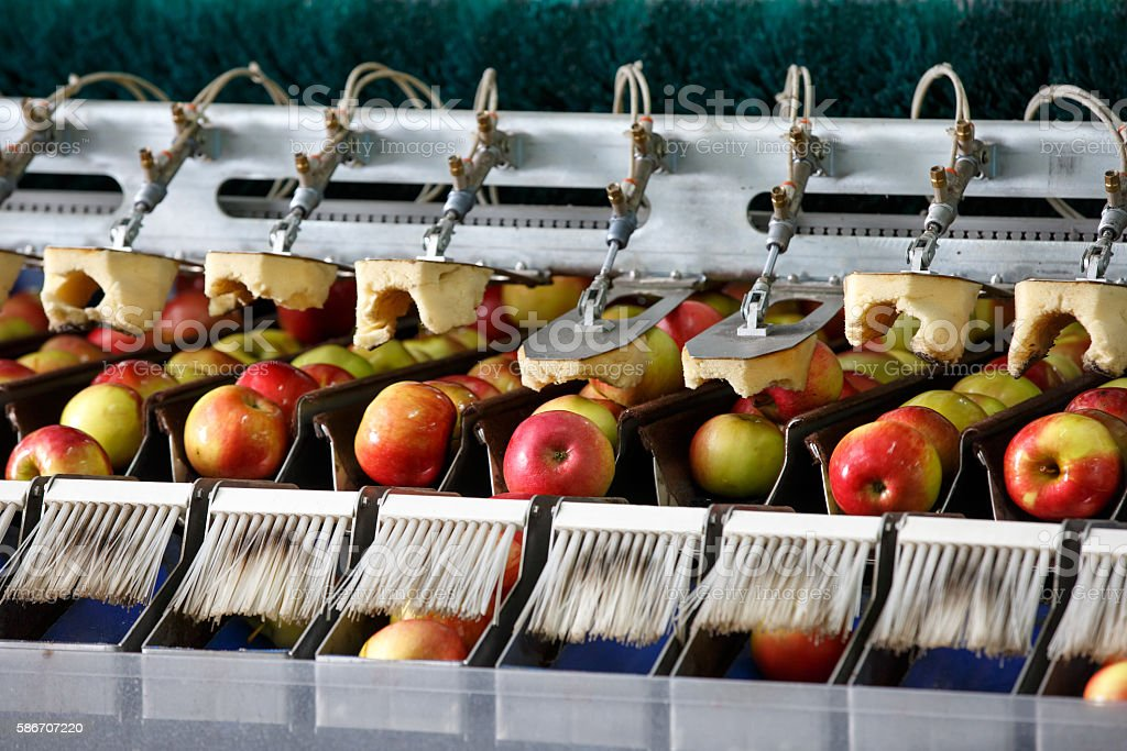 Clean and fresh apples on conveyor belt stock photo