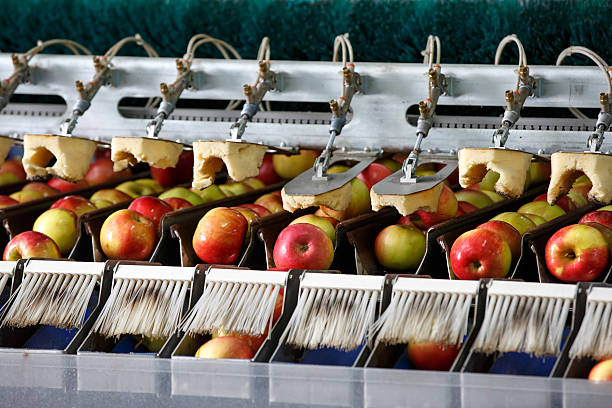Clean and fresh apples on conveyor belt - Photo