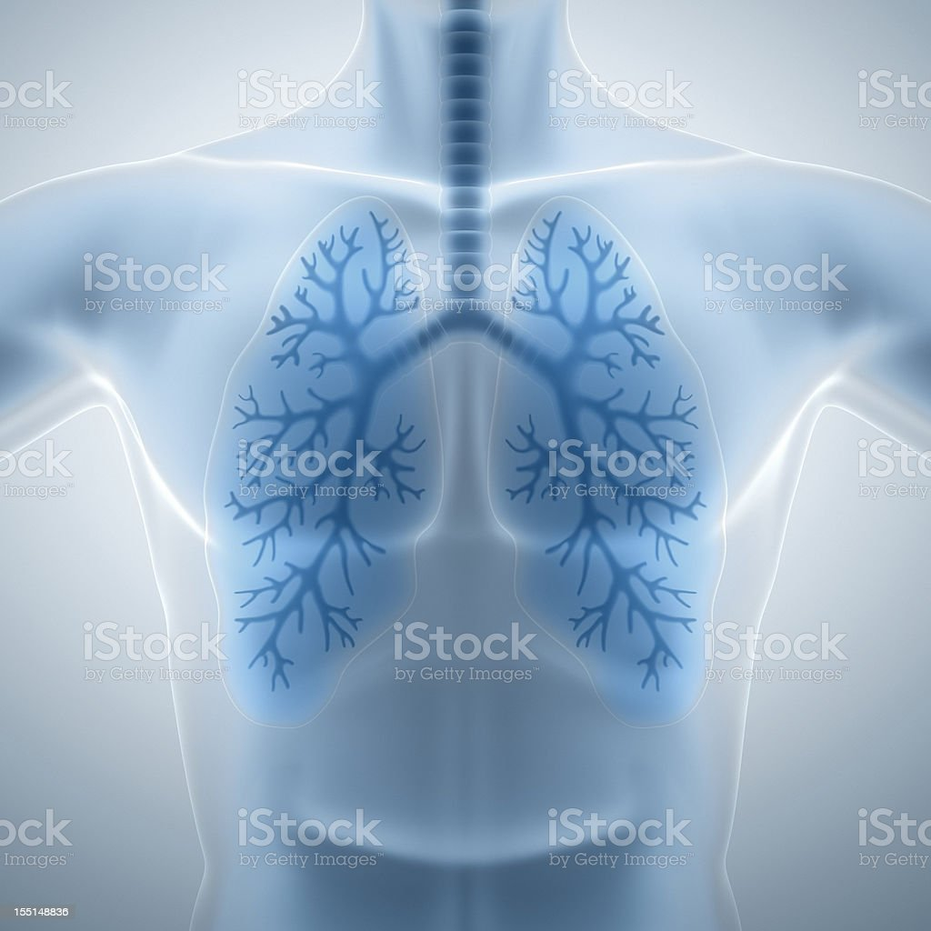 Clean and healthy lungs royalty-free stock photo