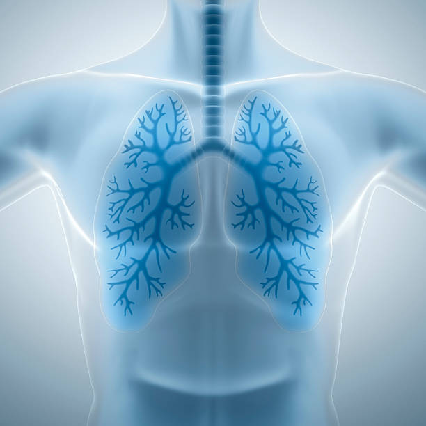 Clean and healthy lungs  chest torso stock pictures, royalty-free photos & images