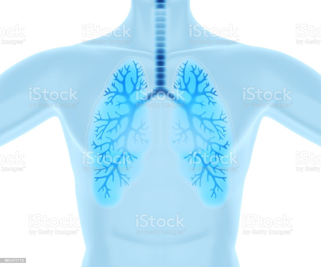 Clean and healthy lungs stock photo