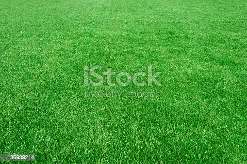 Close-up of a clean empty grass field — background texture