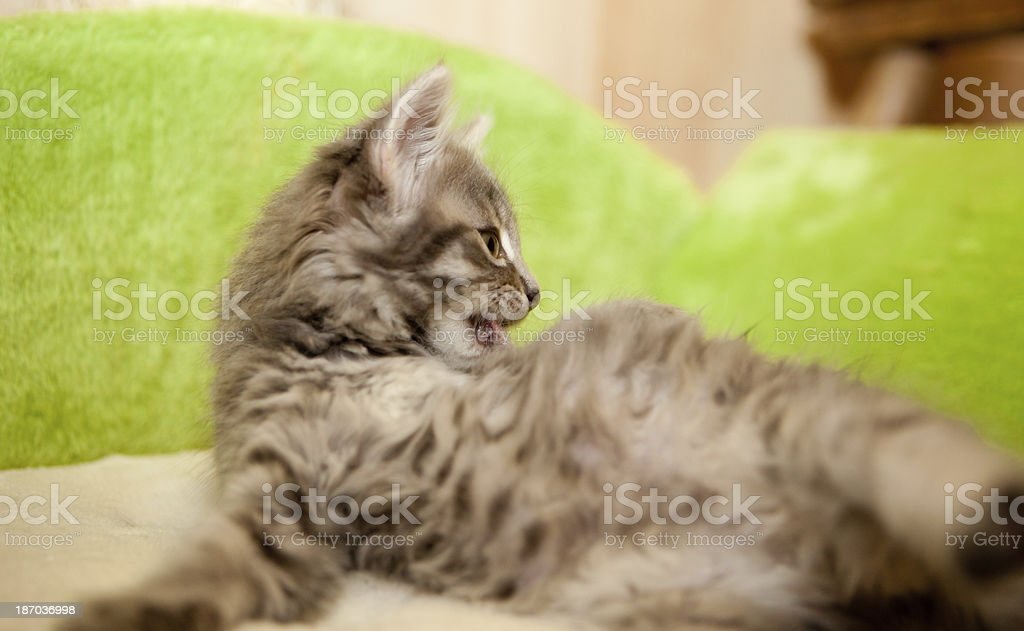 clean kitty stock photo