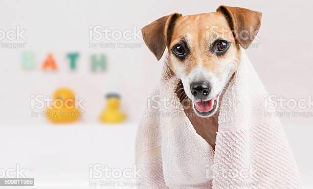 Clean pet spa picture id509611965?b=1&k=6&m=509611965&s=612x612&h=cdhe5bix7aqun61 ppc w2q5g6kahmwssodwgxbh054=