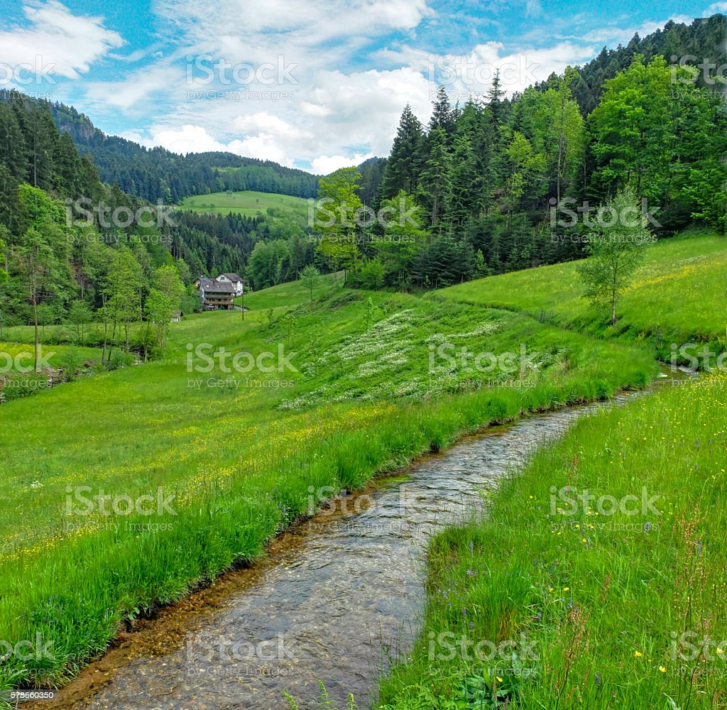 clean running water in Lierbachtal in Germany's Black Forest stock photo