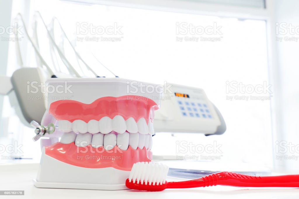 Clean teeth denture, dental jaw model and toothbrush in dentist's office. stock photo