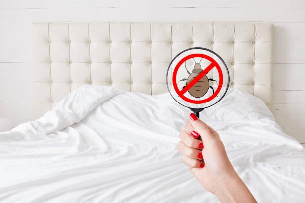 Sauberkeit und Reinheit Konzept. Unkenntlich weiblich mit roten Maniküre Halt Objektiv mit Insekten Stoppschild erkennt Bettwanzen. Keine Fehler gibt. Überprüfung der sanitären Bedingungen in Hotelzimmer – Foto