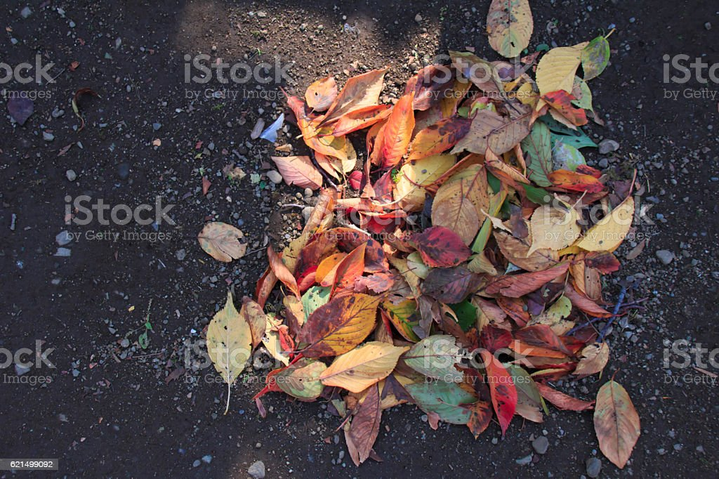 Cleaning and collecting fallen leaves photo libre de droits