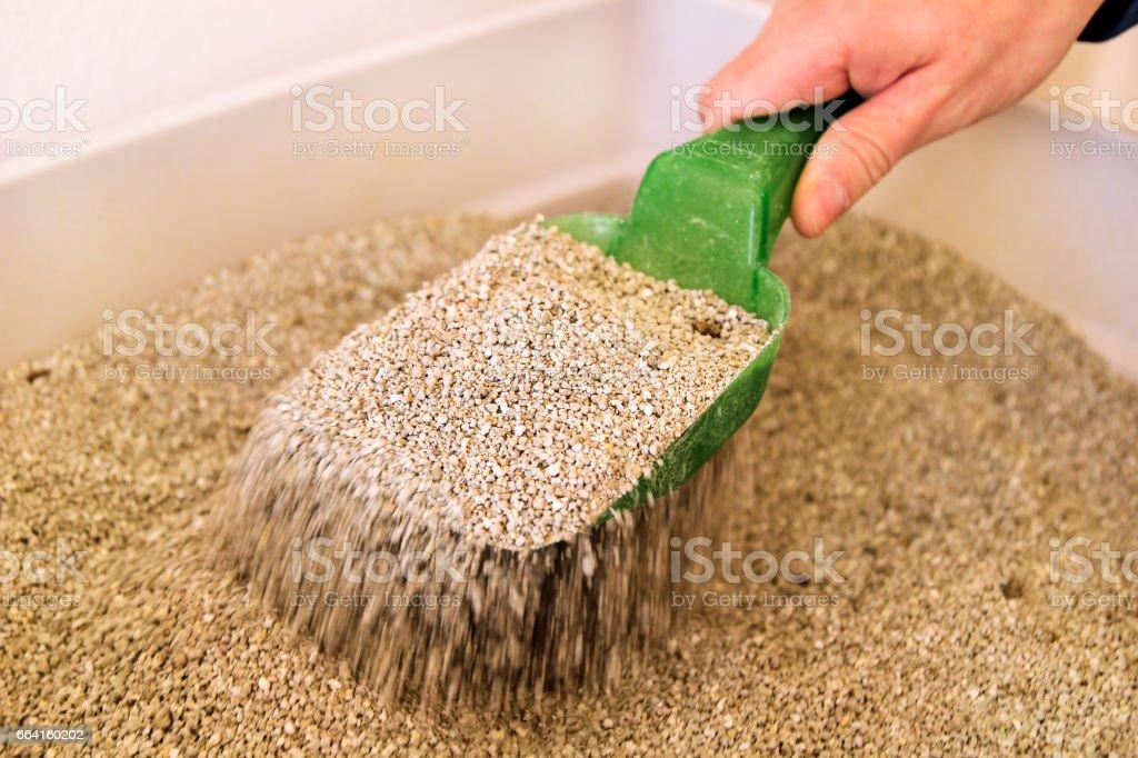 Limpeza de caixa de areia do gato. Mão é limpeza da caixa de areia do gato com espátula verde. Gato de banheiro limpeza de areia de gato. foto royalty-free