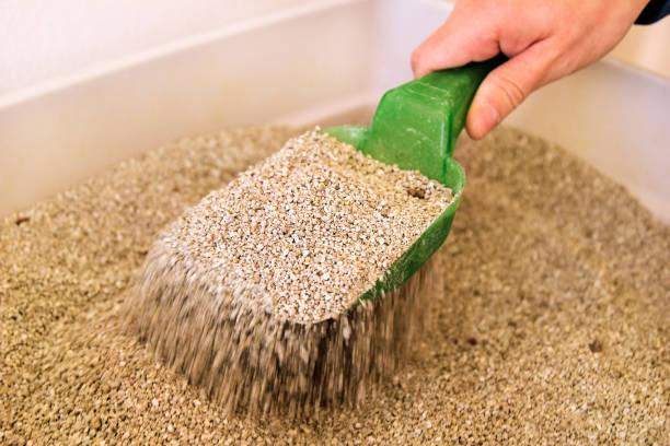 Limpeza de caixa de areia do gato. Mão é limpeza da caixa de areia do gato com espátula verde. Gato de banheiro limpeza de areia de gato. - foto de acervo