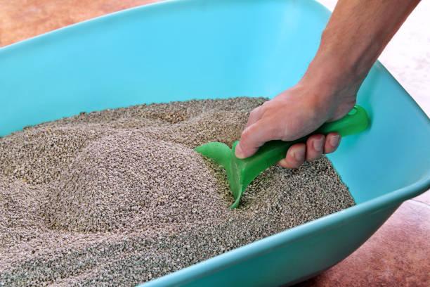 Limpeza de caixa de areia do gato. Mão é limpeza da caixa de areia do gato com espátula verde. Gato do banheiro limpando a areia. Homem caixa de areia de mão e gato. Areia para gatos. Colher de plástico e pá. Limpeza de fezes de gato. - foto de acervo
