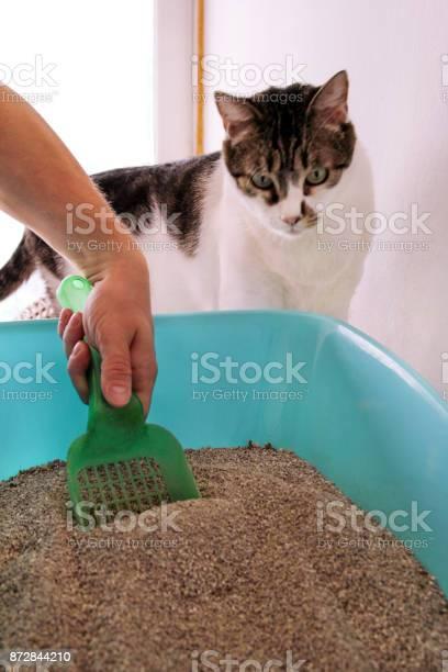 Cleaning cat litter box hand is cleaning of cat litter box with green picture id872844210?b=1&k=6&m=872844210&s=612x612&h=e5pk1cxspl8rbyetdoalipkmdih1voeadvujg8huiku=