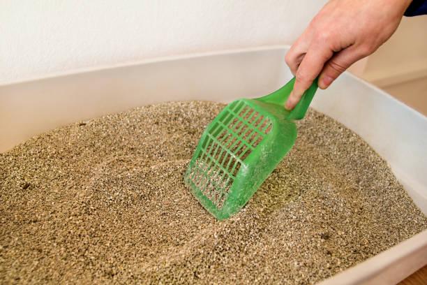 Limpeza de caixa de areia do gato. Mão é limpeza da caixa de areia do gato com espátula verde. Gato de banheiro limpeza de areia de gato. Limpeza de fezes de gato. Mão segurando a pá de plástico remover cocô de gato. Areia para gatos. - foto de acervo