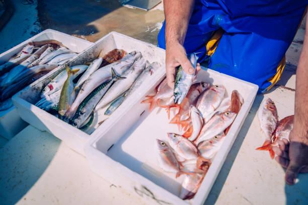 der reinigung fisch - segelhandschuhe stock-fotos und bilder