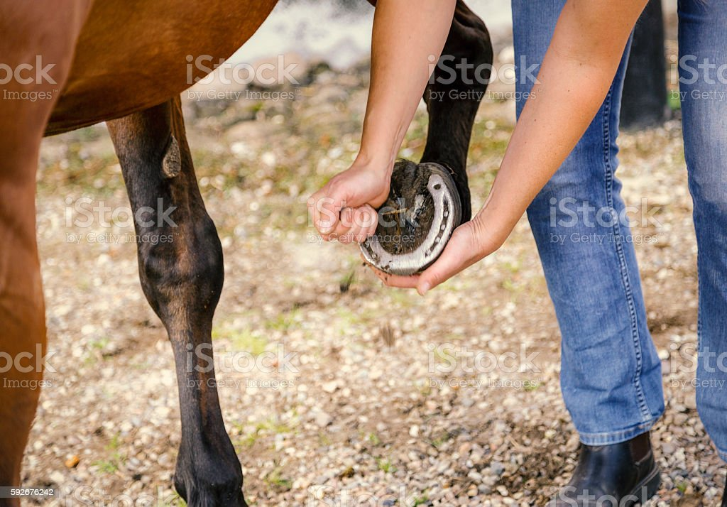 Cleaning horses hoof stock photo