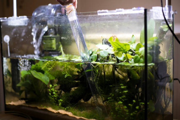 Reinigung des Aquariums – Foto