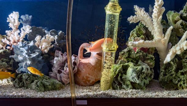 cleaning of  aquarium - home aquarium stock pictures, royalty-free photos & images