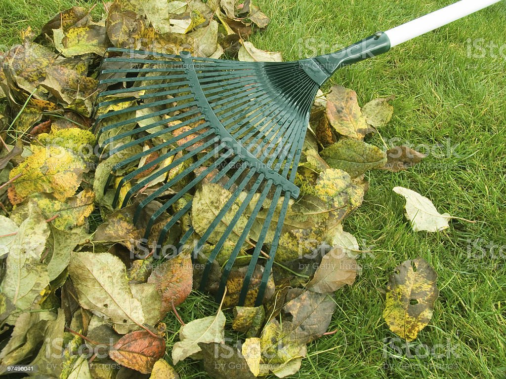 Cleaning of autumn leaves royalty-free stock photo