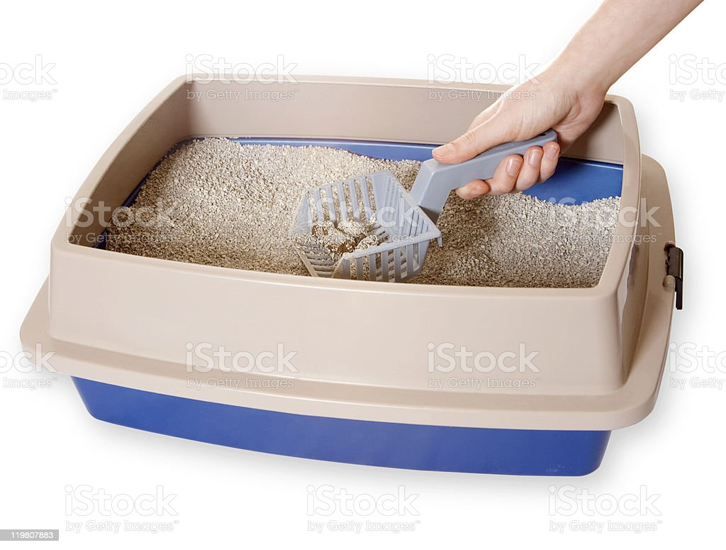 Cleaning Out Litter box stock photo
