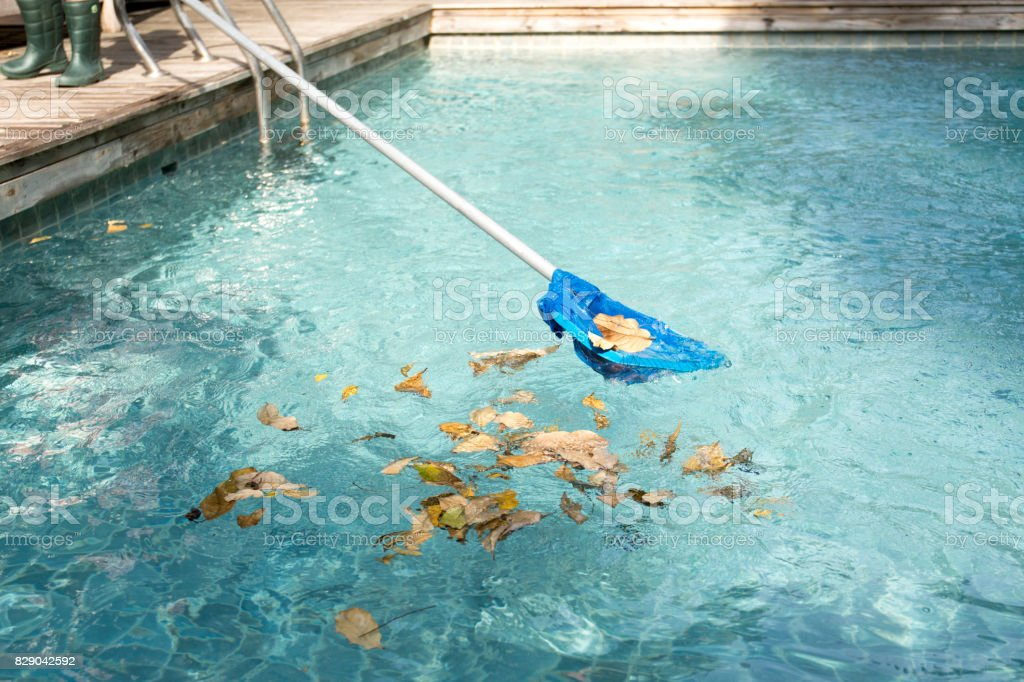 Cleaning swimming pool of fallen leaves with blue skimmer stock photo