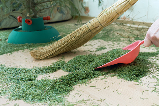 Cleaning the floor from dry fallen Christmas tree needles after New Year holidays