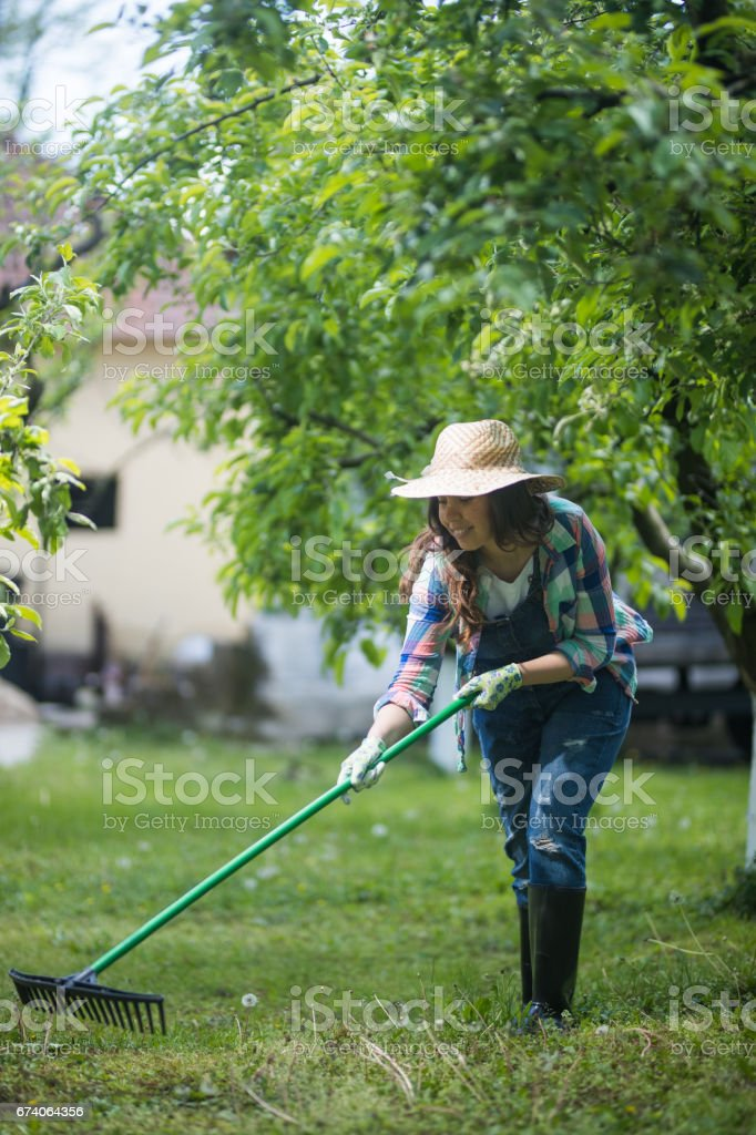 Cleaning the lawn royalty-free stock photo