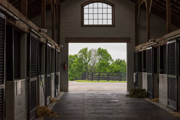 Cleaning Time in Horse Barn Cleaning Time in Horse Barn on quiet morning stable stock pictures, royalty-free photos & images
