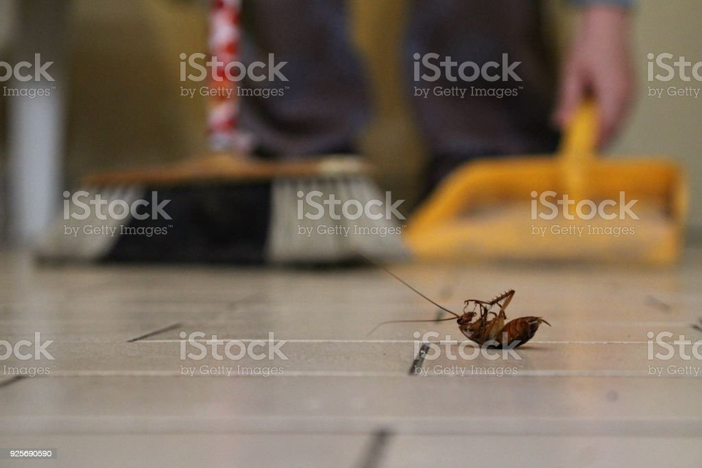 Cleaning up a cockroach stock photo