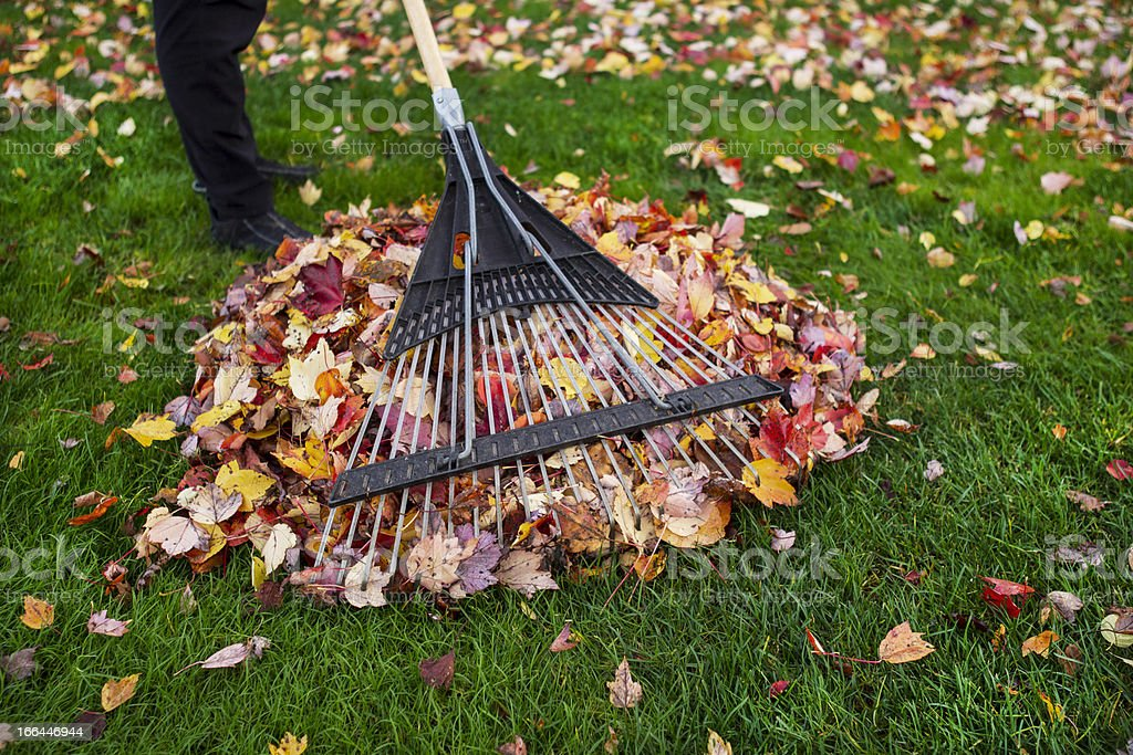 Cleaning up Yard during Autumn stock photo