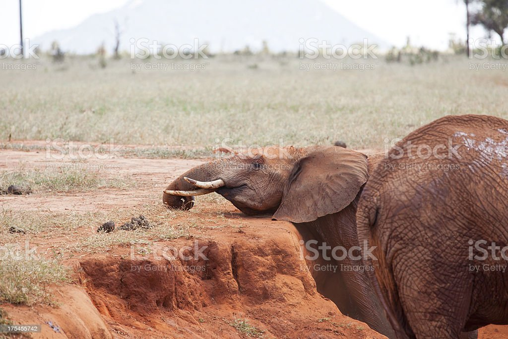 Cleaning with dirt royalty-free stock photo